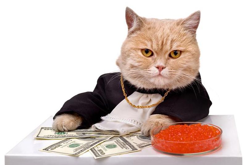Коты - миллионеры