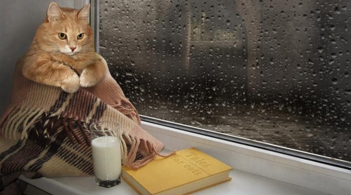 Что почитать...кошачьего?  5 книг с котами в главной роли